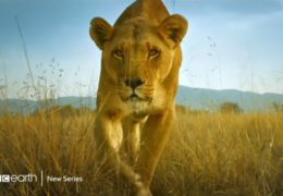 BBC Earth – Serengeti